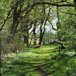 Small square prinsaskogen och v tmarken 004